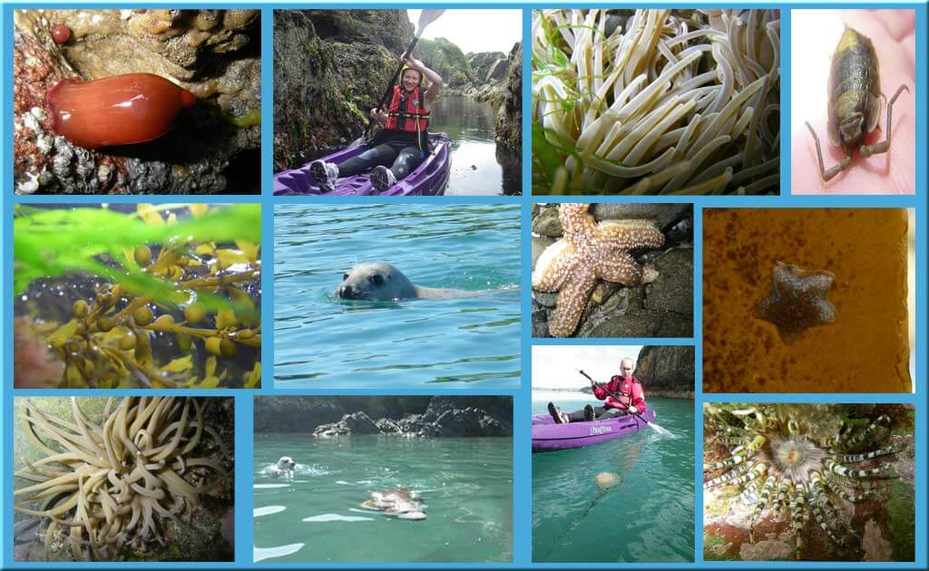 Collection-of-marine-life-seals-jelly-fish-star-fish-in-Pembrokeshire.