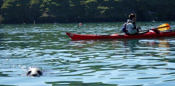 Skomer Island Kayaking trip in Pembrokeshire, Wales.