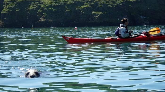 Skomer Island Sea Kayaking trip in Pembrokeshire, Wales.