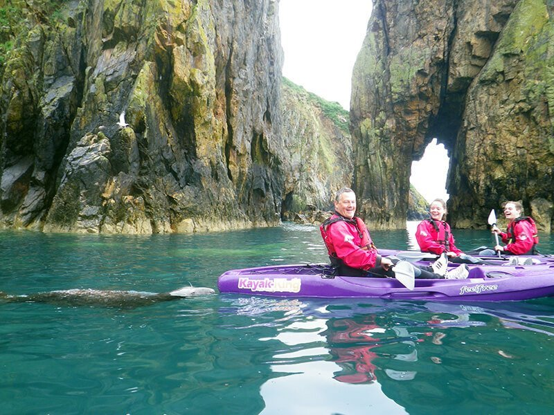 Atlantic Grey Seals playing with kayak in Pembrokeshire